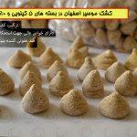 کشک موسیر اصفهان