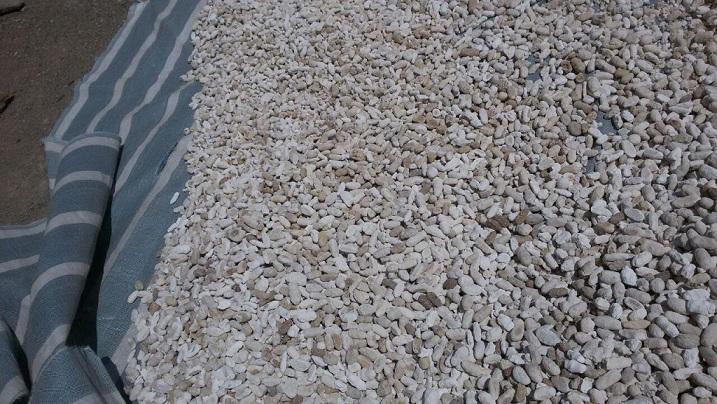 کشک خشک سنتی